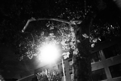 broken branch obscures full moon